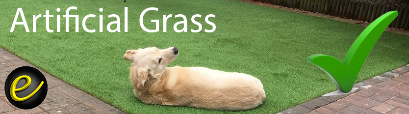 Lara the Lab-x on Artificial Grass